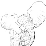 baby elephant for print
