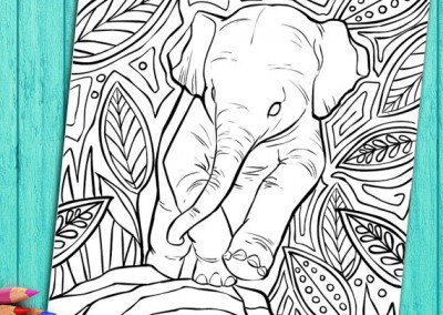 Coloring Book Page For Adults Baby Elephant